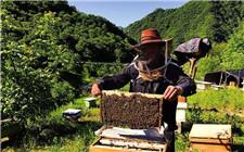 中国优质蜂产品科技创新联盟成立 将推动我国蜂业健康发展