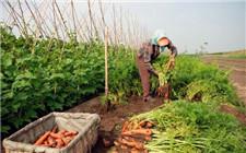 无公害蔬菜怎么防虫?绿色种植防虫方法