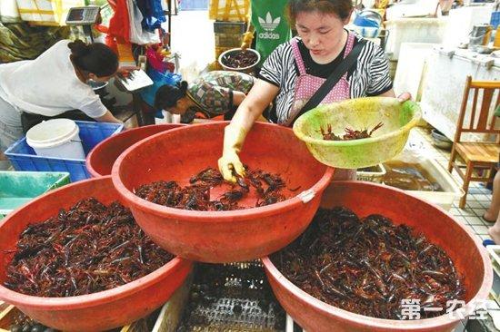 2018年全国小龙虾需求量大增 小龙虾年产值或达2000亿