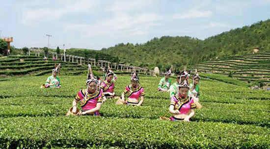 泰顺茶产业助力乡村振兴 《采茶舞曲》经典传唱六十载