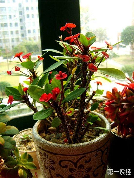 带刺的不一定是玫瑰,还有可能是这些花!带刺的花品种盘点欣赏