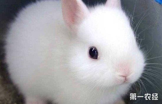 家养兔子用什么饲料?兔子饲料配给方法