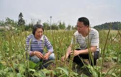 放弃高薪返乡带村民发展种植产业增收发财