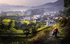 乡村振兴:发展乡村振兴需要解决的几个突出问题!
