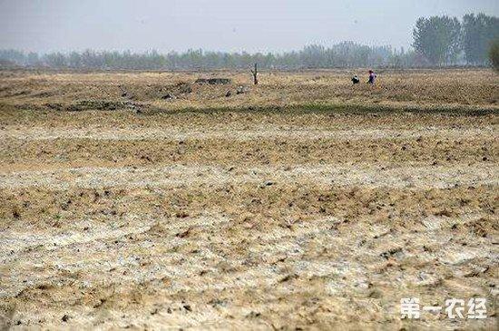 土壤酸碱度怎么调节 碱性土壤