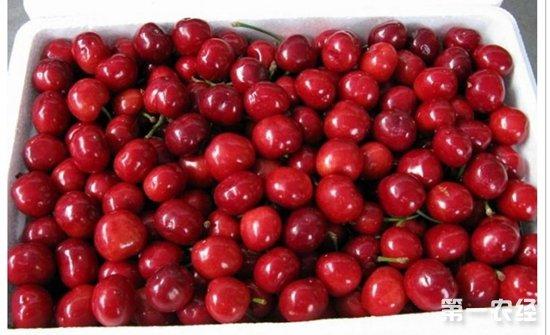 五月份河南水果上市量增大价格走低