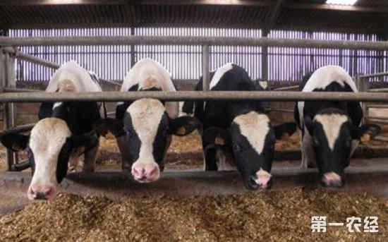 围产期奶牛发生代谢疾病的病因及其防治