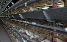 <b>怎么进行鸡笼的日常维护保养?鸡笼日常维修工作介绍</b>