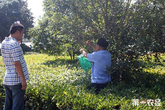我国农业用地生物防治面积超4亿亩次