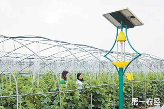 提高生物绿色防控率推广生防技术
