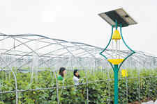提高生物绿色防控率 推广农业生防技术