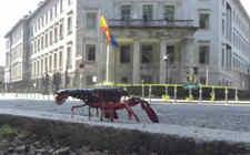 德国小龙虾泛滥 政府允许民众捕捉吃食