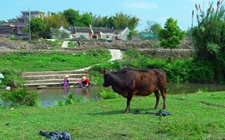 农业专家张晓山:促进乡村治理体系不断完善
