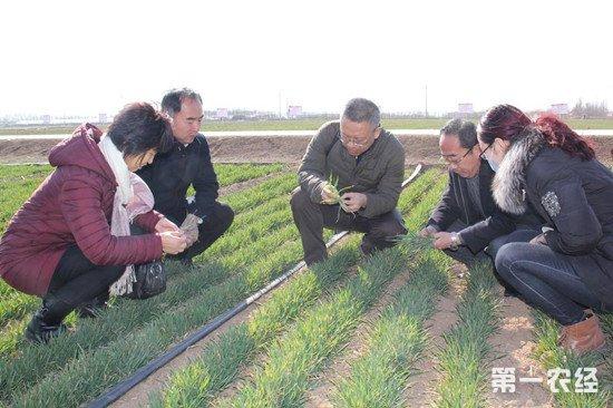新疆农业专家组团下乡 为农业生产保驾护航