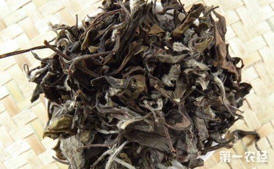 大悟寿眉茶