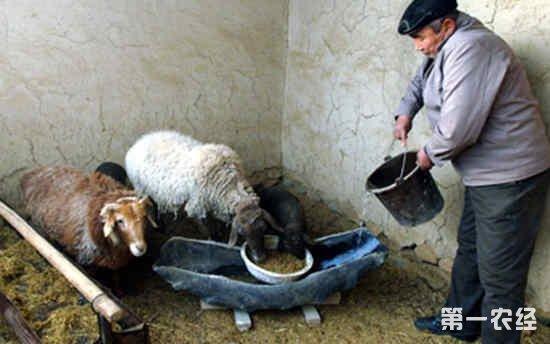 羊群干喂和湿喂的优缺点