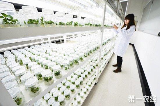 我国实现大宗农作物已实现完全自主育种