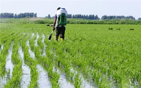 吉林省种植结构调整 播种工作顺利进行
