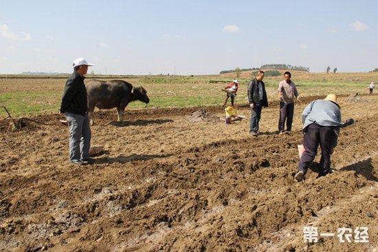 农田底肥用哪些?底肥的施用方法