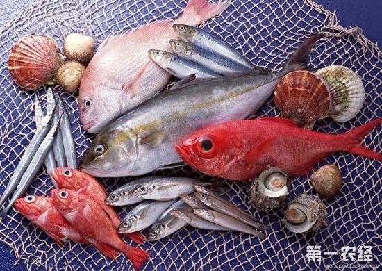 山东威海:水产品市场价格波动不大 个别产品如鲫鱼价格下降