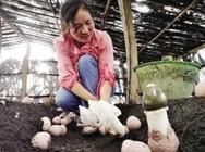 <b>返乡创业食用菌带财富 小小竹荪和村民携手致富路</b>