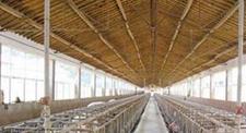 台风过后猪场如何做好防疫和降低损失?