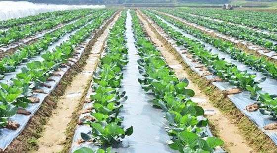 农业保险怎么办理?蔬菜种植保险购买流程