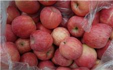 苹果行情上涨 市场呼吁维护苹果期货市场健康发展