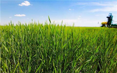 辽宁完善农业补贴制度:新型农业主体也享受农业补贴