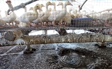 福建漳州市开展畜禽养殖污染防治督查工作