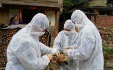 云南昆明检查春季重大动物疫病防控工作结果