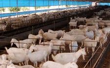 云南普洱栗坪村发展集体经济 壮大集体经济养殖项目
