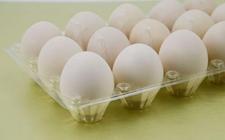 <b>2018年5月22日养鸡市场价格行情怎么样?今日养鸡行情概述</b>