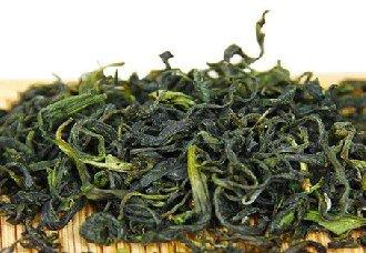 崂山绿茶要怎么采摘?崂山绿茶的制作工艺