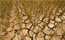 黑龙江部分地区出现旱情 省农业部组织抗旱