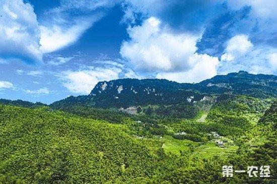 四川省18个林业项目获国家68亿资金支持