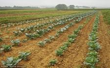 振兴农村现代化战略,农村经济稳定大提升