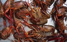 小龙虾肠炎急救方案,请收好,以备急用!