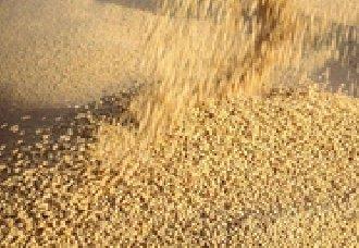重大喜讯:大豆技术取得重大突破,收成翻一番指日可待