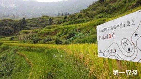 广西全州:良田撂荒?揭秘龙水镇供给侧改革