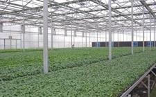 <b>农业企业引领新方向,下一个路口在哪里?</b>