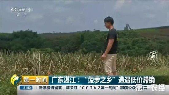 为何徐闻县菠萝价格低到1毛3一斤还滞销?