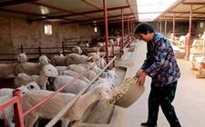 山东潍坊:逐步关停小散污养殖户 加快推进畜牧业转型升级