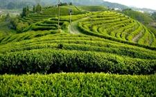中山市农业局:首建政策性农业保险品种项目库 分类管理全部农业险种