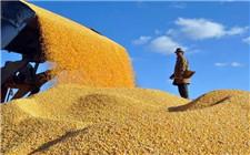 夏季粮油收购会议召开 确保粮食收购顺利