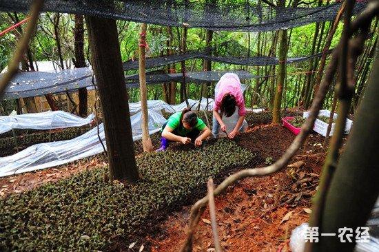 中国林改第一县——武平的绿色发展之路