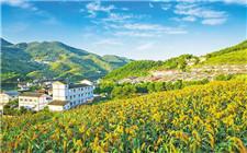 山东省推出具体方案 实施乡村组织振兴