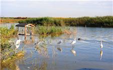 七里海拆除旅游设施 恢复原生态的她更美了