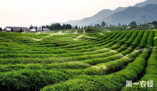 浙江投入3000亿元建设生态文明 农村生态建设是重点