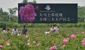 <b>第八届中国月季展9月绵竹举行 中国玫瑰谷邀您观展</b>